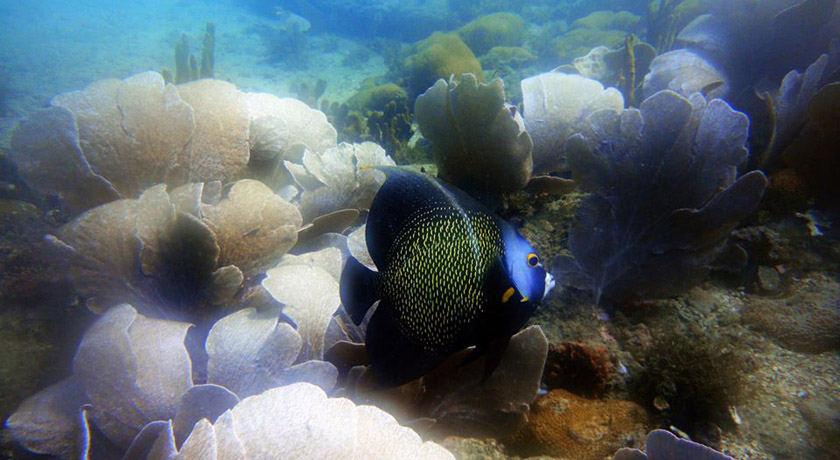 excursion-buceo-profesional-de-playa-en-buzios-04.jpg